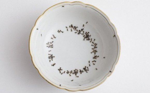 Creepy Porcelain Dishes